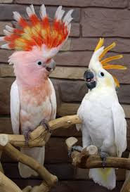Parrots For Sale in Great Yarmouth Norfolk Classifieds Free Ads
