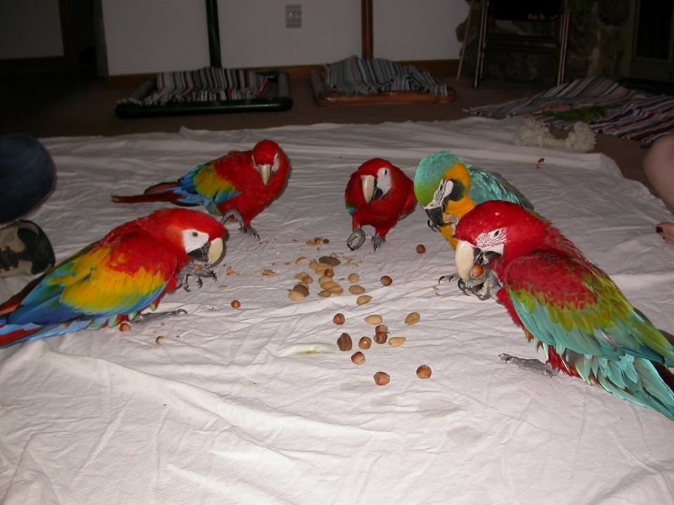Parrots For Sale in Grimsby Lincolnshire Classifieds Free Ads