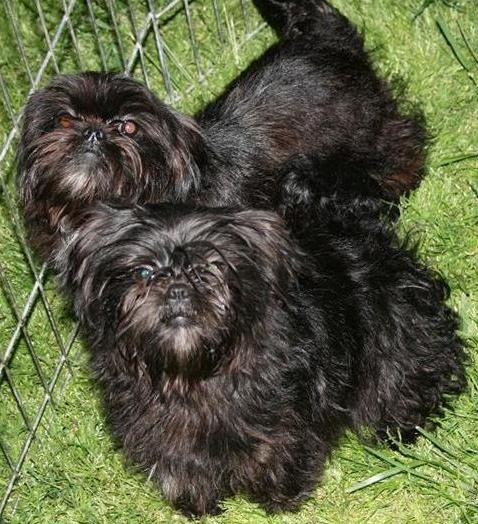 Tremail Puppies For Sale Classifieds Free Ads Cornwall