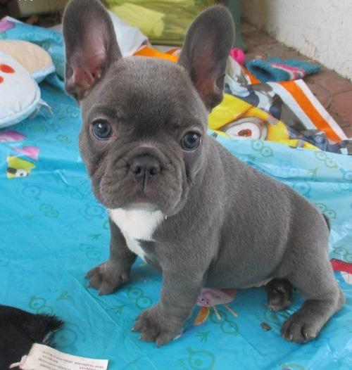 Cwm Ffrwd Oer Dogs For Sale Classifieds Free Ads Torfaen