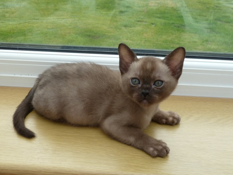 Cats For Sale in Bagillt Flintshire Classifieds Free Ads